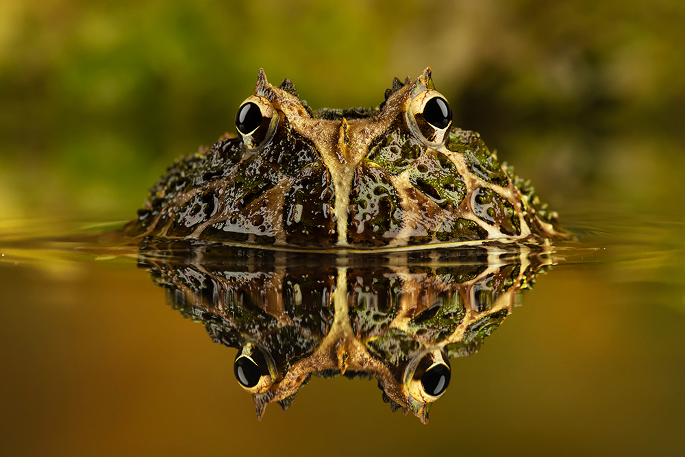 Just Frogs Photography Workshops