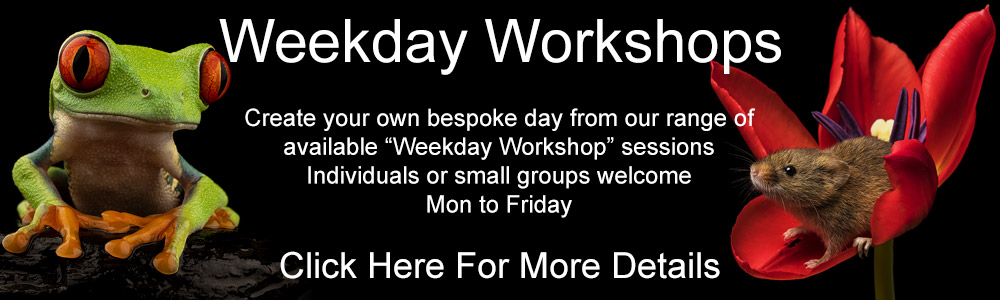 Click Here To See Our Weekday Photography Workshops