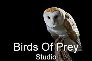 Indoor Birds Of Prey Studio Workshop