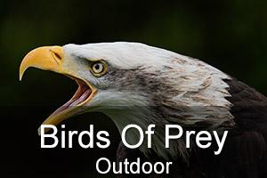 Outdoor Birds Of Prey Photo Workshop
