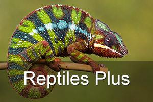 Indoor Reptiles Plus Photography Workshop